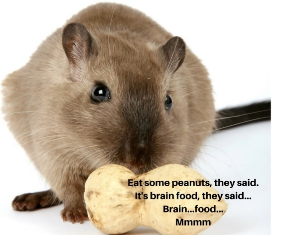 Eat some peanuts, they said. It's brain food, they said... Brain...food... Mmmm (1)