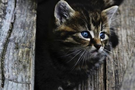 cat-914110_1920